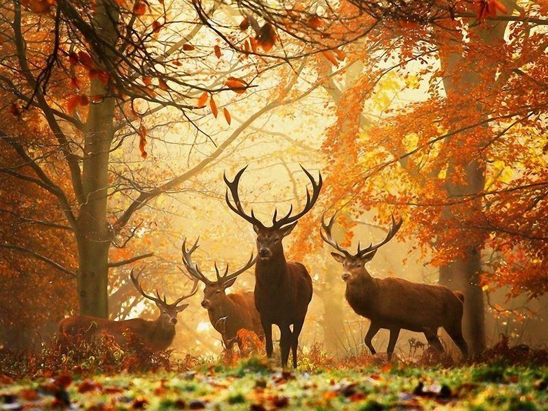 фото сказочная осень